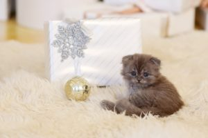 Die besten Weihnachtsgeschenke für deine Katze