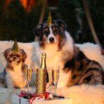 So beruhigst du Hund und Katze beim Silvester - Feuerwerk