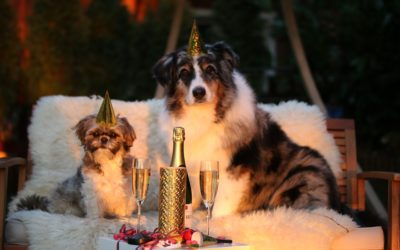 So beruhigst du Hund und Katze beim Silvester – Feuerwerk