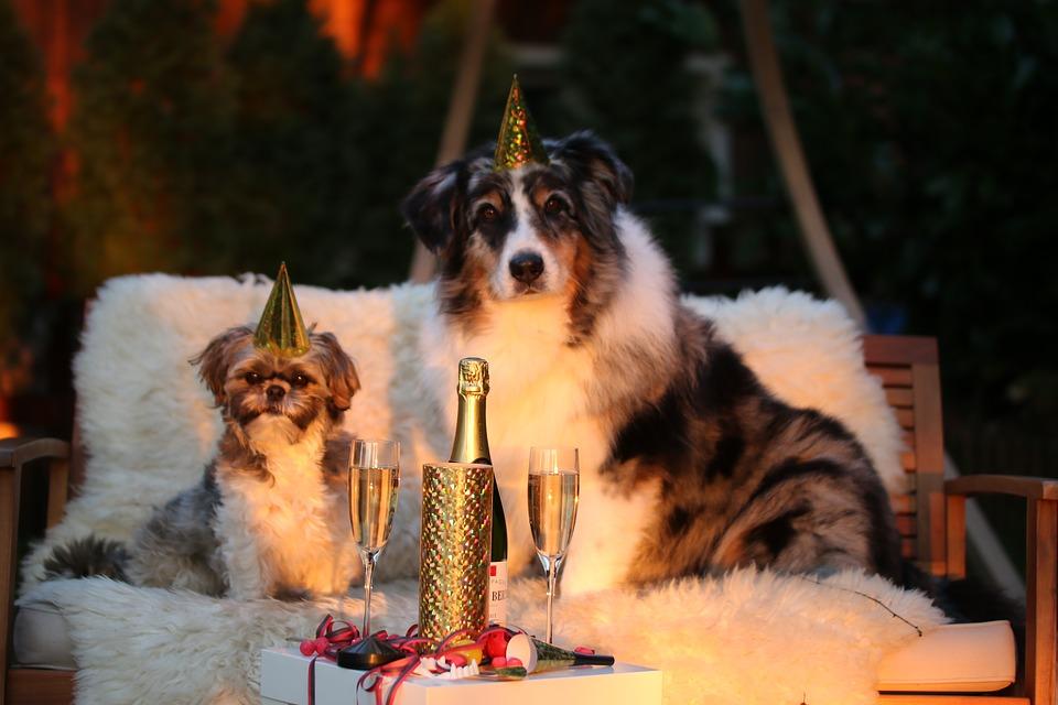 Hunde Katzen Silvester Feuerwerk