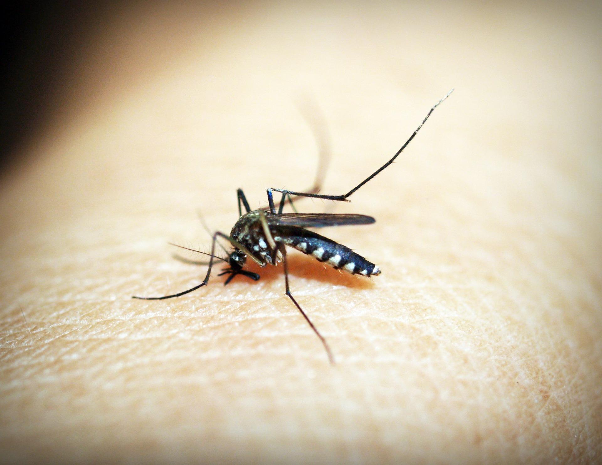 5 Tipps, mit denen Mücken einen Bogen um dich machen. Tschüß, Mückenstiche!