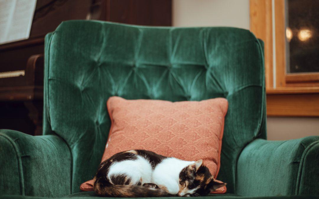 Katzen-Senioren: Tipps für die Wohnung