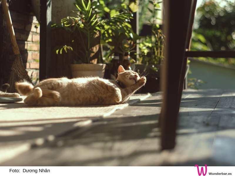 Hund und Katze suchen sich immer Sommer gemütliche Plätzchen