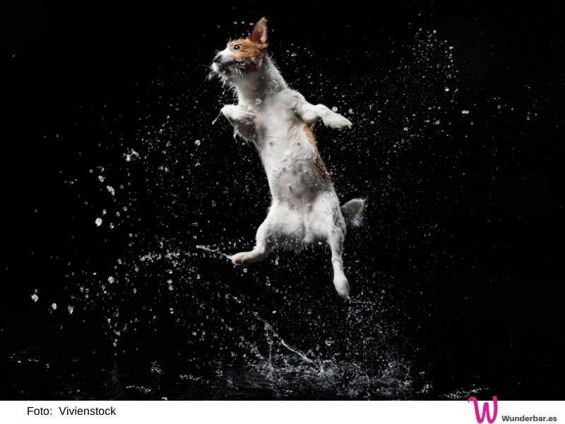 Die meisten Hunde lieben Wasser und sind bei Hitze dankbar für die Möglichkeit, sich ein wenig zu erfrischen