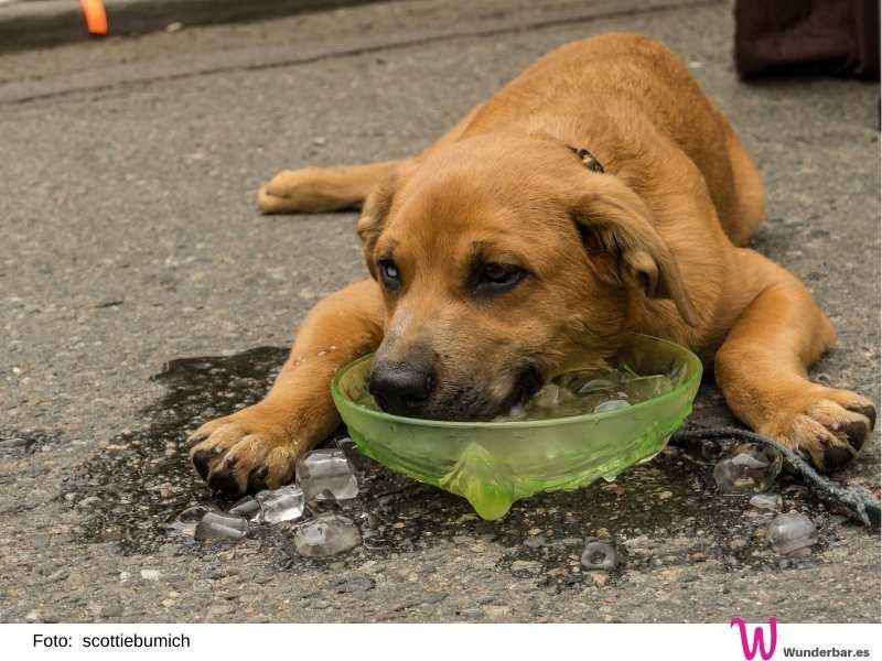 Viel trinken ist bei der Wärme im Sommer für Hunde und Katzen ebenso wichtig wie für Menschen