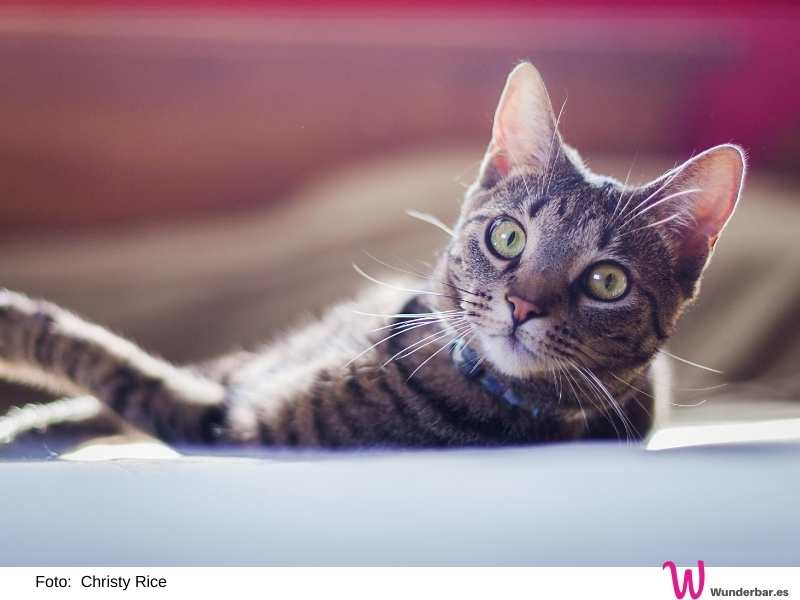 Bei großer Hitze brauchen Haustiere eine liebevolle Extrabehandlung