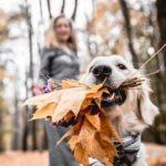 Herbst Deko mit Naturmaterialien