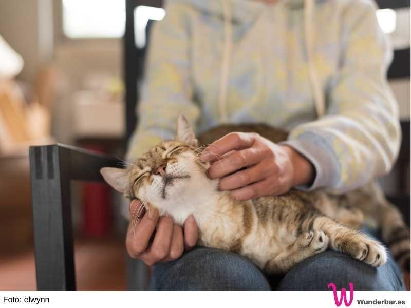 Zeit für Kuscheleinheiten. Eine alte Katze hat oft ein großes Bedürfnis nach Nähe und gibt dabei auch so viel zurück.