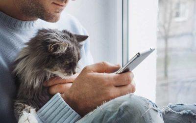 Alte Katzen verwöhnen und gut versorgen