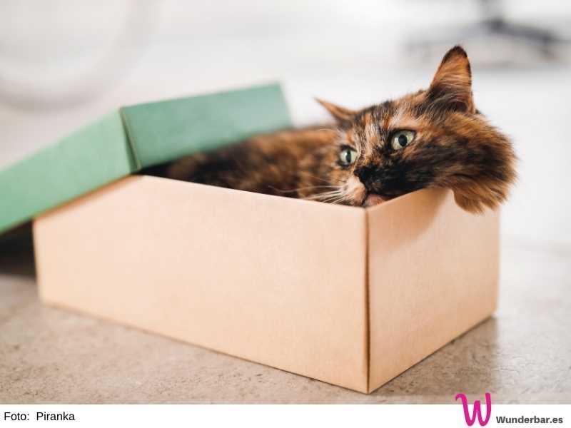 Katzen lieben Schukarton, Kartons und Schachteln. In den kleinen Kisten können sie Stress abbauen und entspannen. Je kleiner und enger, desto lieber quetschen sie sich hinein.