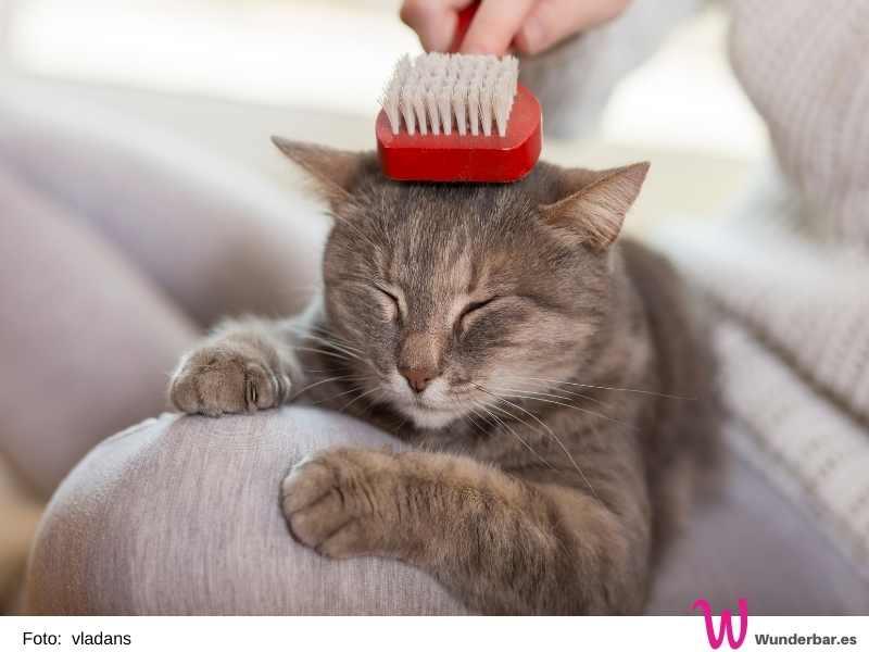 Wenn die alten Katzen nicht mehr an alle Stellen ihren Körpers herankommen, sind wir Menschen mit liebevoller Hilfe gefragt.