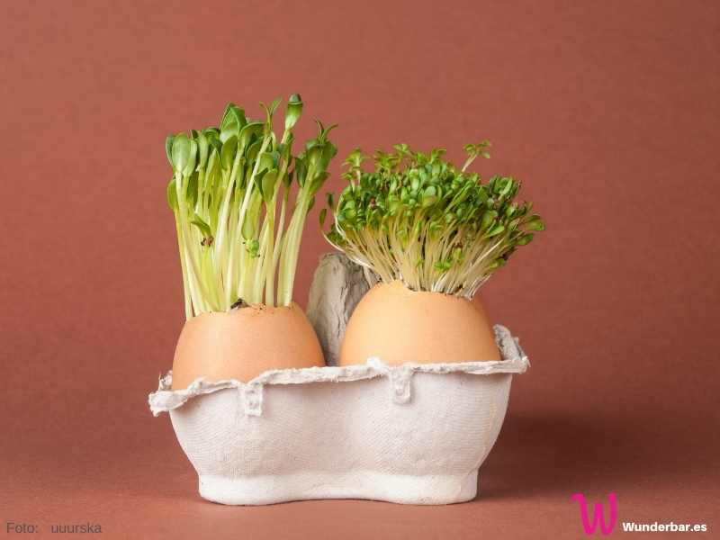 Eierschalen haben die perfekte Größe und Form für ein Kressetöpfchen. Ein Eierkarton hilft beim Balancieren und gibt dem Ganzen einen gemütlichen Touch.