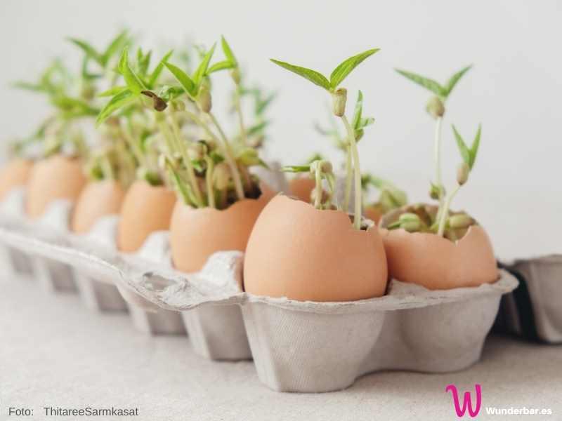 Wenn die Saat aufgegangen ist, kann das Ei mit ins Freie gepflanzt werden.