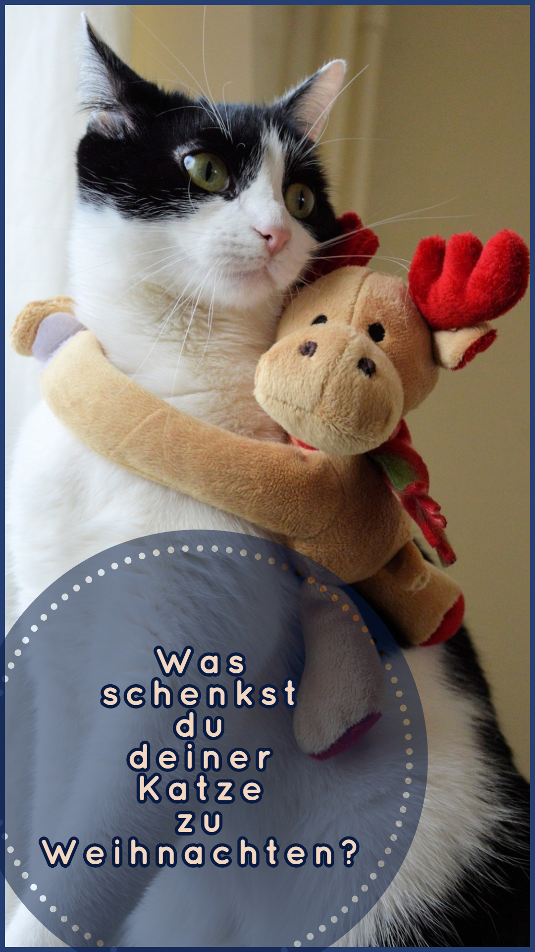 Wunderbare Weihnachtsgeschenke für Katzen
