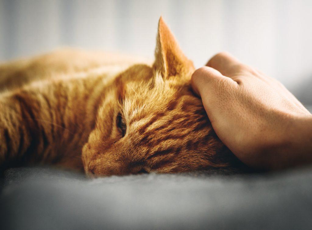 Wenn Katzen älter werden, brauchen sie in manchen Dingen sanfte Unterstützung. So kannst du deine Wohnung Katzen-Senioren-gerecht einrichten.