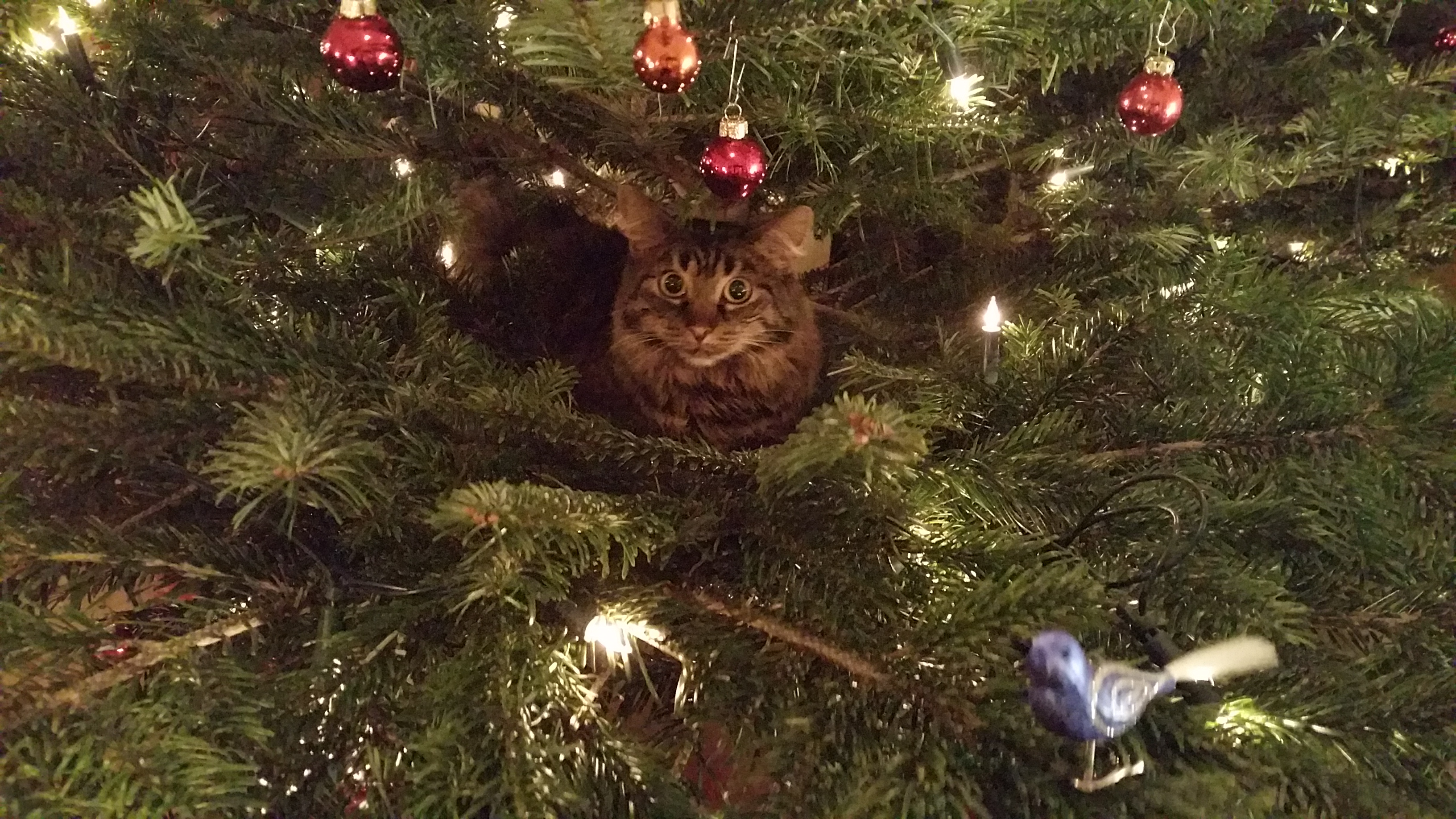 Katzen als Baumschmuck