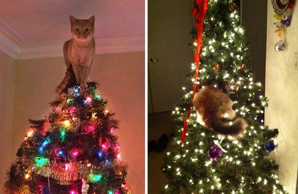 Katze als Weihnachtsbaumspitze