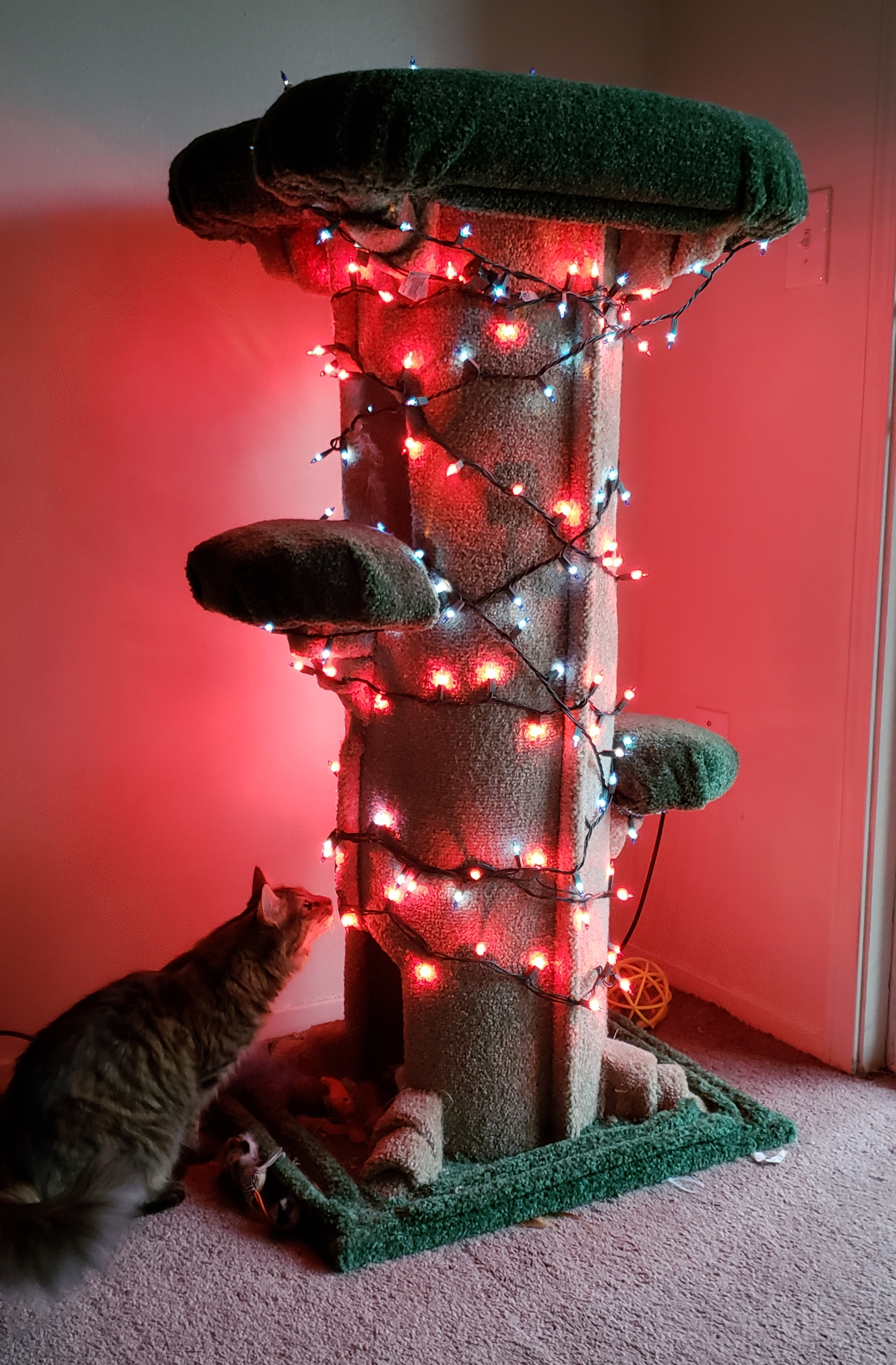 Weihnachtlicher Kratzbaum