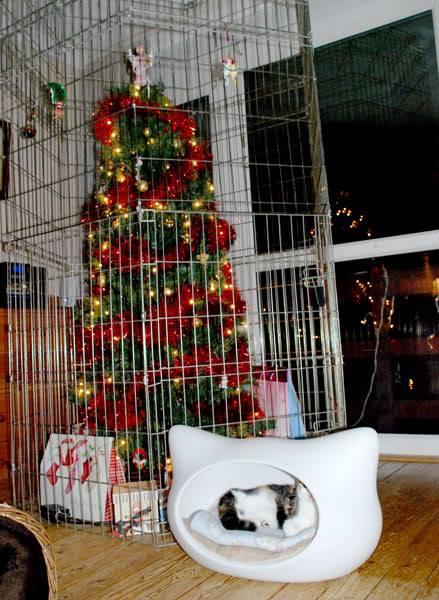 Katzensicherer Weihnachtsbaum