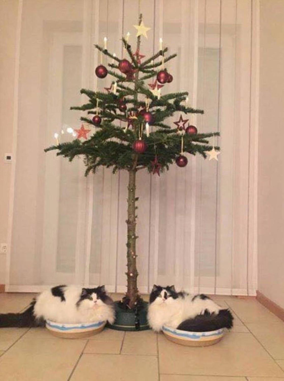 Katzensichere Weihnachtsbäume